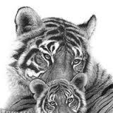 tigress and the cub